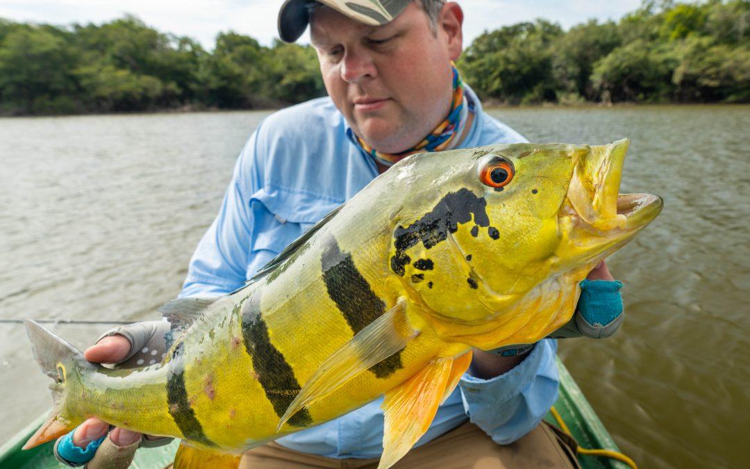 Agua Boa Peacock Bass