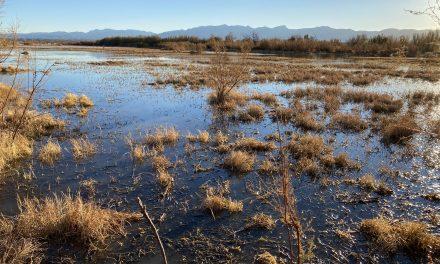 Borderland Birds: Hunting on the Rio Grande in El Paso, Texas