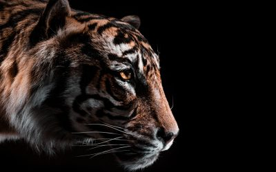 Hunting Tigers Beneath the Earth