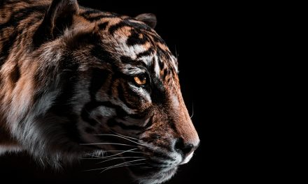 Hunting Tigers Beneath the Earth