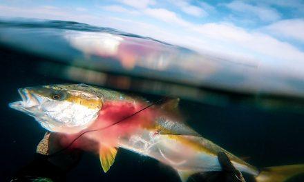 Never Grab a Hot Fish
