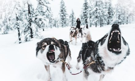 The Danish Serius Dog Sled Patrol is Serious