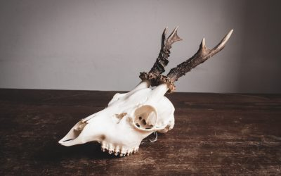 Top Five Taxidermist Complaints