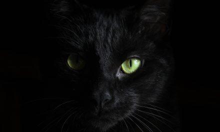 Would It Kill Ya To Shoot A Cat?
