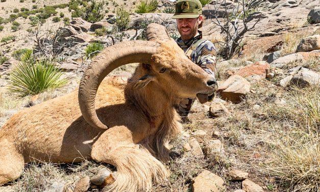 Chinati Range TX Aoudad Hunt Report
